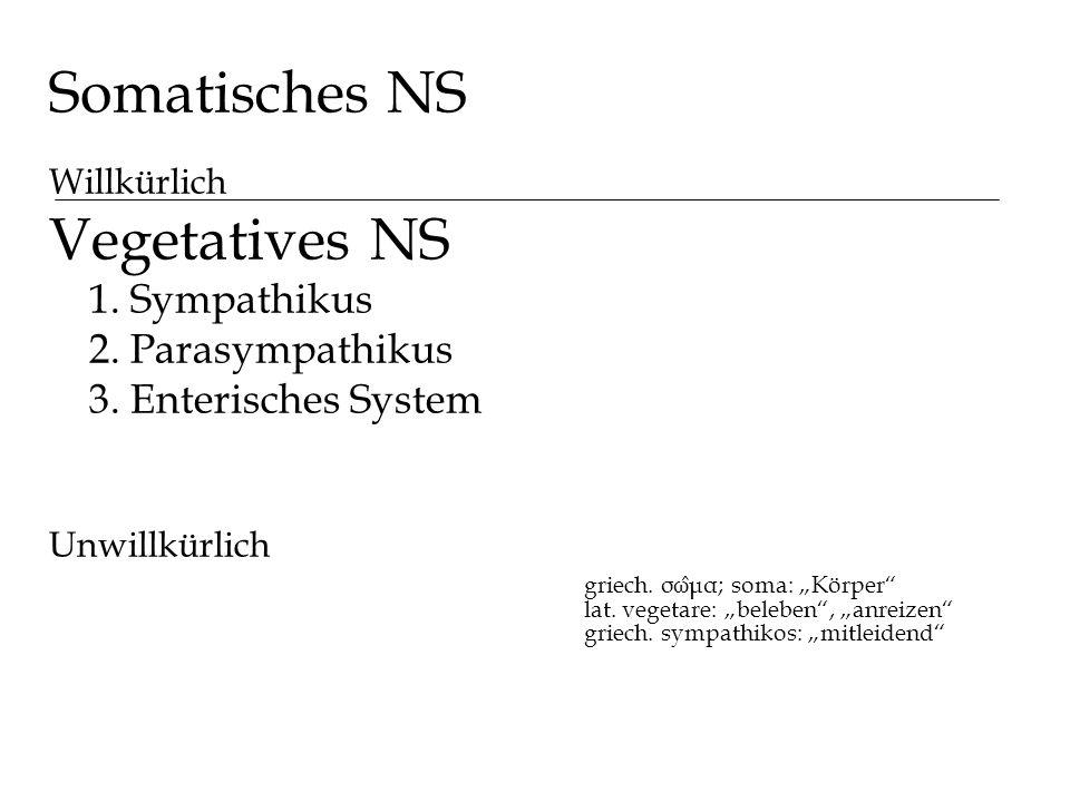 Somatisches NS Willkürlich Vegetatives NS 1. Sympathikus 2. Parasympathikus 3. Enterisches System Unwillkürlich griech. σω ̂ μα; soma: Körper lat. veg