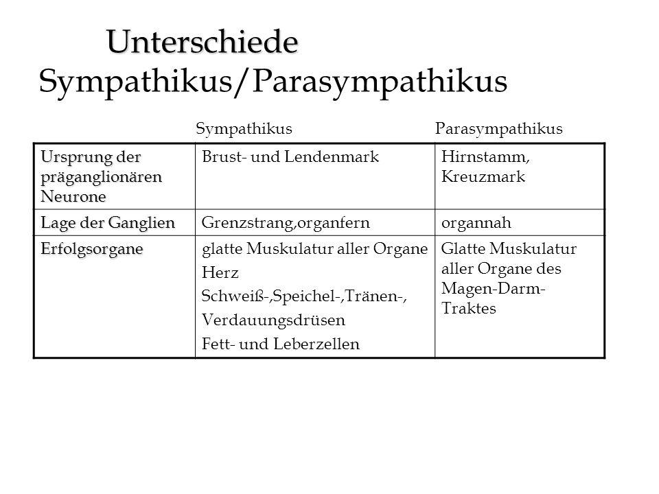 Unterschiede Unterschiede Sympathikus/Parasympathikus SympathikusParasympathikus Ursprung der präganglionären Neurone Brust- und LendenmarkHirnstamm,
