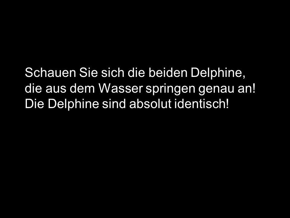 Schauen Sie sich die beiden Delphine, die aus dem Wasser springen genau an! Die Delphine sind absolut identisch!