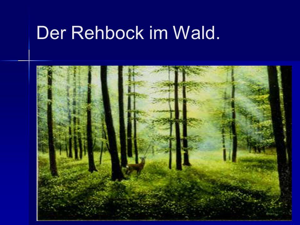 Der Rehbock im Wald.