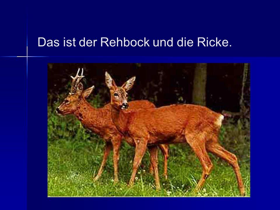 Das ist der Rehbock und die Ricke.