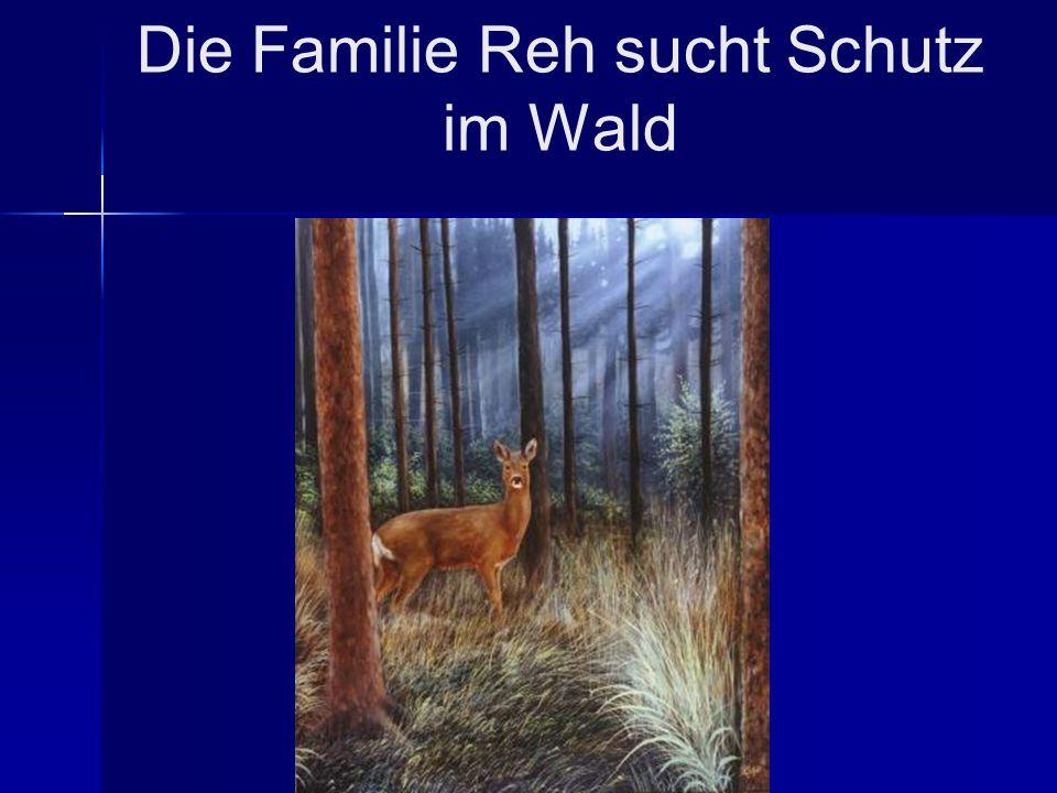 Die Familie Reh sucht Schutz im Wald
