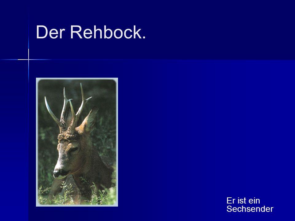 Der Rehbock. Er ist ein Sechsender