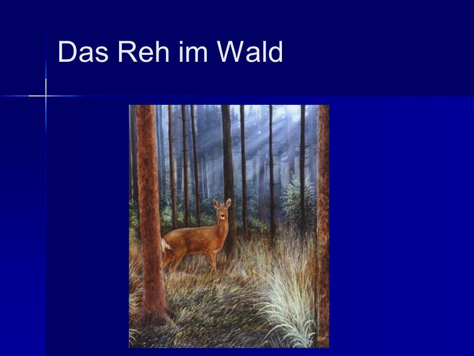 Das Reh im Wald