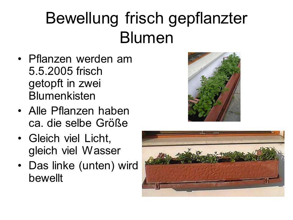 Bewellung frisch gepflanzter Blumen Pflanzen werden am 5.5.2005 frisch getopft in zwei Blumenkisten Alle Pflanzen haben ca.