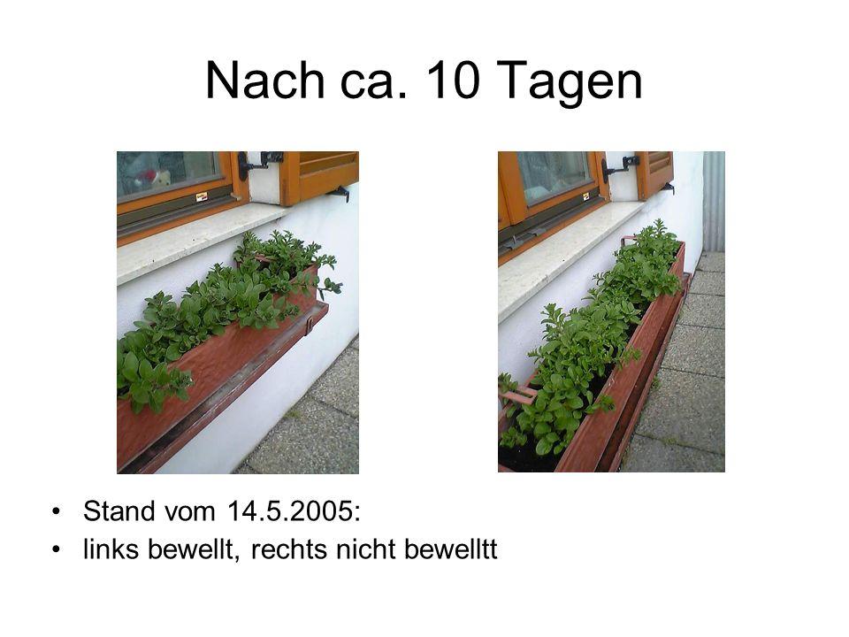 Nach ca. 10 Tagen Stand vom 14.5.2005: links bewellt, rechts nicht bewelltt