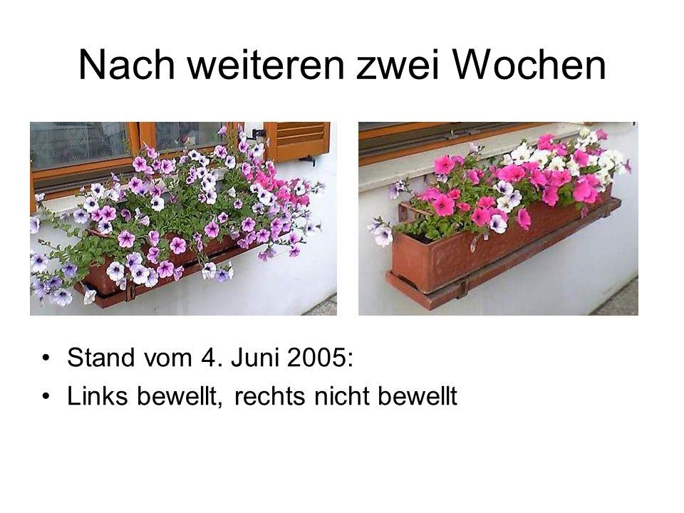 Nach weiteren zwei Wochen Stand vom 4. Juni 2005: Links bewellt, rechts nicht bewellt