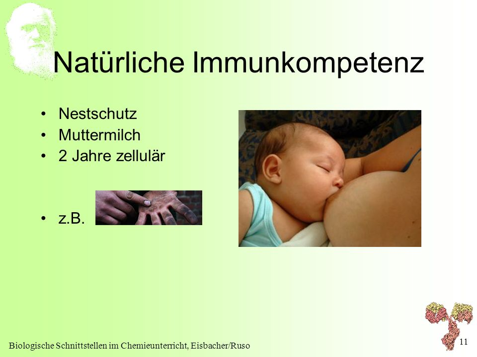 Biologische Schnittstellen im Chemieunterricht, Eisbacher/Ruso 11 Natürliche Immunkompetenz Nestschutz Muttermilch 2 Jahre zellulär z.B.