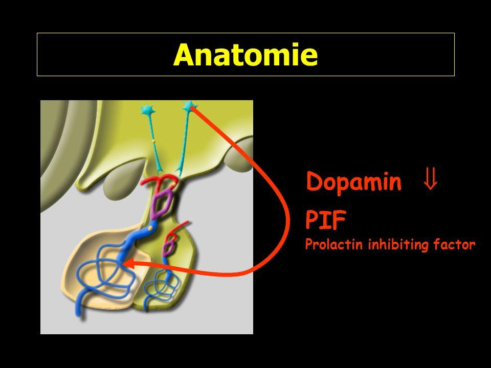 Anatomie Dopamin PIF Prolactin inhibiting factor