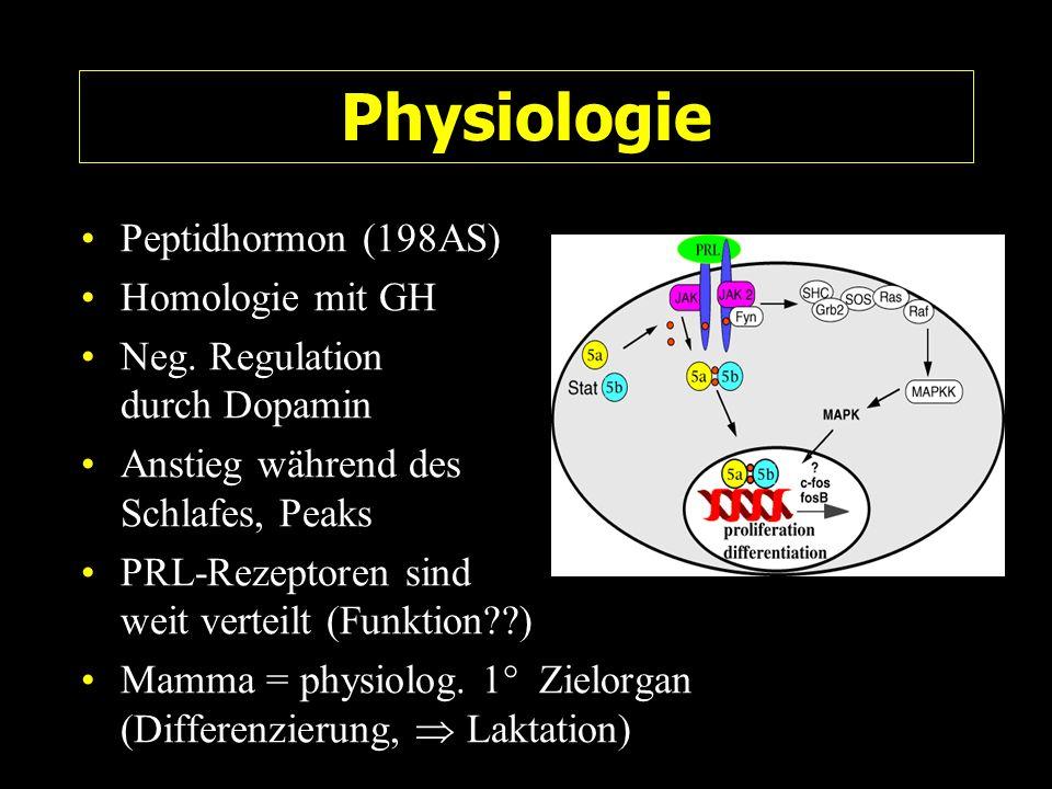 Physiologie Peptidhormon (198AS) Homologie mit GH Neg. Regulation durch Dopamin Anstieg während des Schlafes, Peaks PRL-Rezeptoren sind weit verteilt