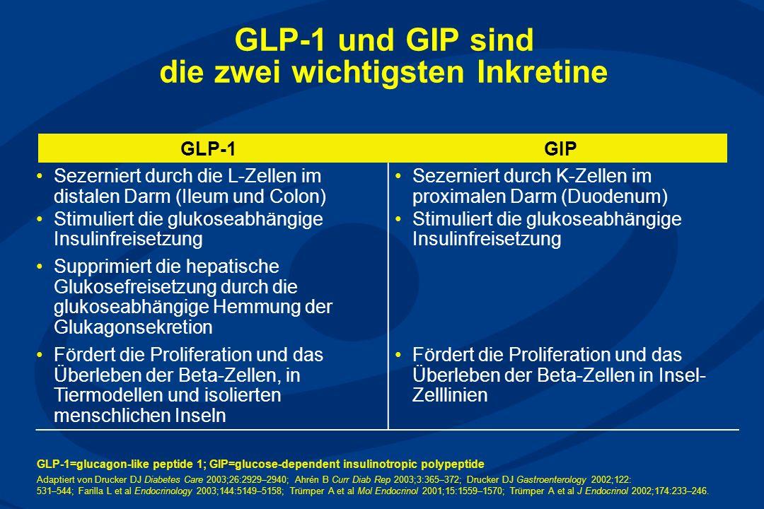GLP-1 und GIP sind die zwei wichtigsten Inkretine GLP-1GIP Sezerniert durch die L-Zellen im distalen Darm (Ileum und Colon) Stimuliert die glukoseabhängige Insulinfreisetzung Sezerniert durch K-Zellen im proximalen Darm (Duodenum) Stimuliert die glukoseabhängige Insulinfreisetzung Supprimiert die hepatische Glukosefreisetzung durch die glukoseabhängige Hemmung der Glukagonsekretion Fördert die Proliferation und das Überleben der Beta-Zellen, in Tiermodellen und isolierten menschlichen Inseln Fördert die Proliferation und das Überleben der Beta-Zellen in Insel- Zelllinien GLP-1=glucagon-like peptide 1; GIP=glucose-dependent insulinotropic polypeptide Adaptiert von Drucker DJ Diabetes Care 2003;26:2929–2940; Ahrén B Curr Diab Rep 2003;3:365–372; Drucker DJ Gastroenterology 2002;122: 531–544; Farilla L et al Endocrinology 2003;144:5149–5158; Trümper A et al Mol Endocrinol 2001;15:1559–1570; Trümper A et al J Endocrinol 2002;174:233–246.