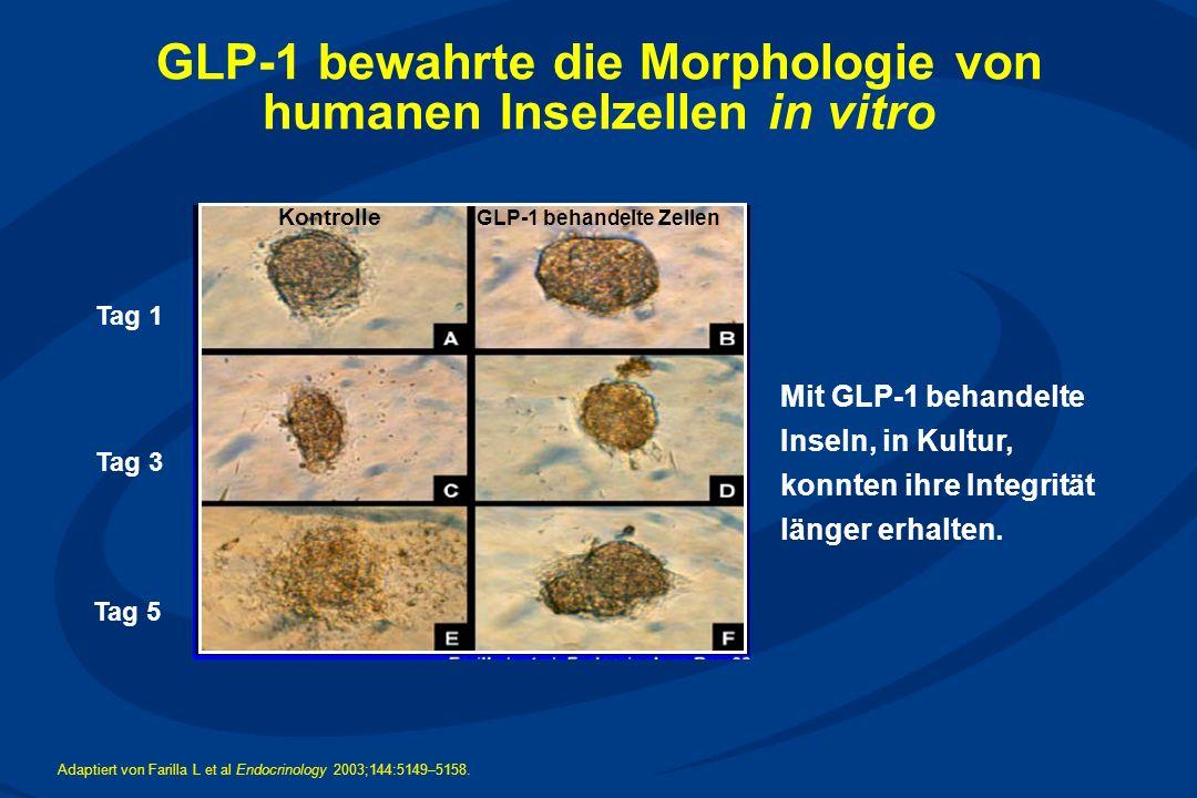 GLP-1 bewahrte die Morphologie von humanen Inselzellen in vitro Tag 1 GLP-1 behandelte Zellen Kontrolle Tag 3 Tag 5 Adaptiert von Farilla L et al Endocrinology 2003;144:5149–5158.