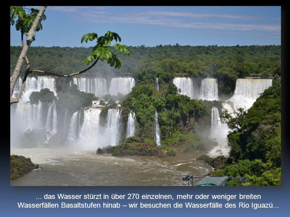 ... das Wasser stürzt in über 270 einzelnen, mehr oder weniger breiten Wasserfällen Basaltstufen hinab – wir besuchen die Wasserfälle des Rio Iguazú..