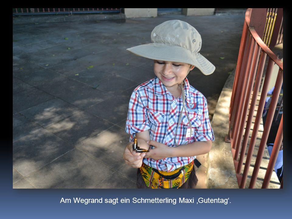 Am Wegrand sagt ein Schmetterling Maxi Gutentag.