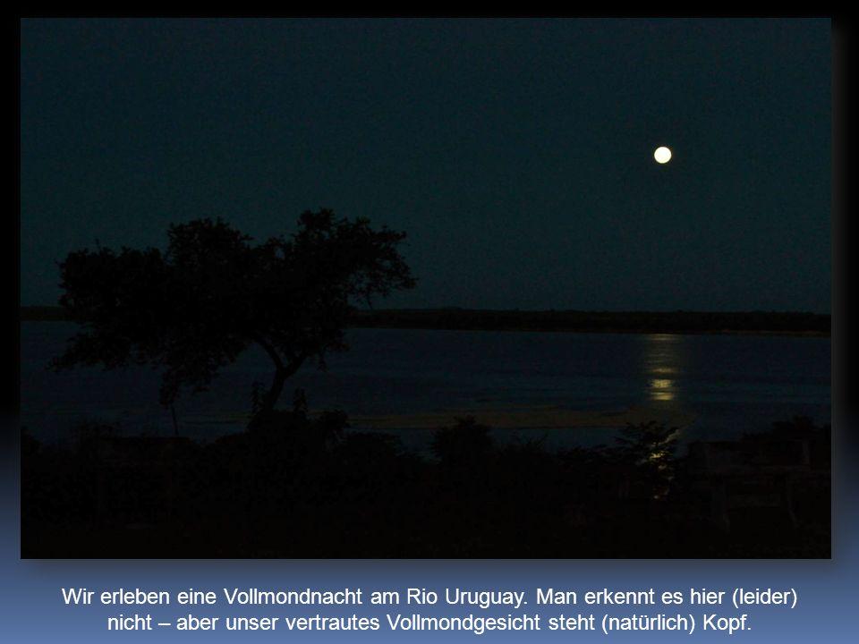 Wir erleben eine Vollmondnacht am Rio Uruguay.