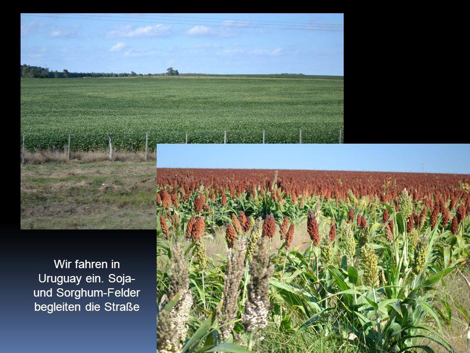 Wir fahren in Uruguay ein. Soja- und Sorghum-Felder begleiten die Straße