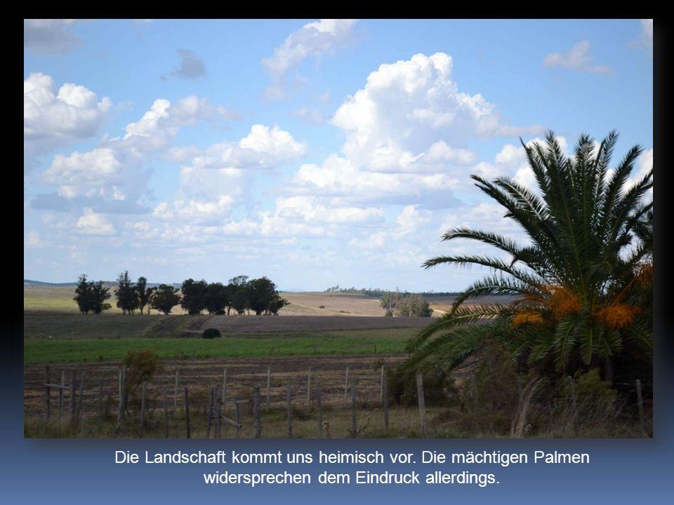 Die Landschaft kommt uns heimisch vor. Die mächtigen Palmen widersprechen dem Eindruck allerdings.