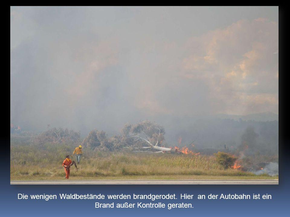 Die wenigen Waldbestände werden brandgerodet.