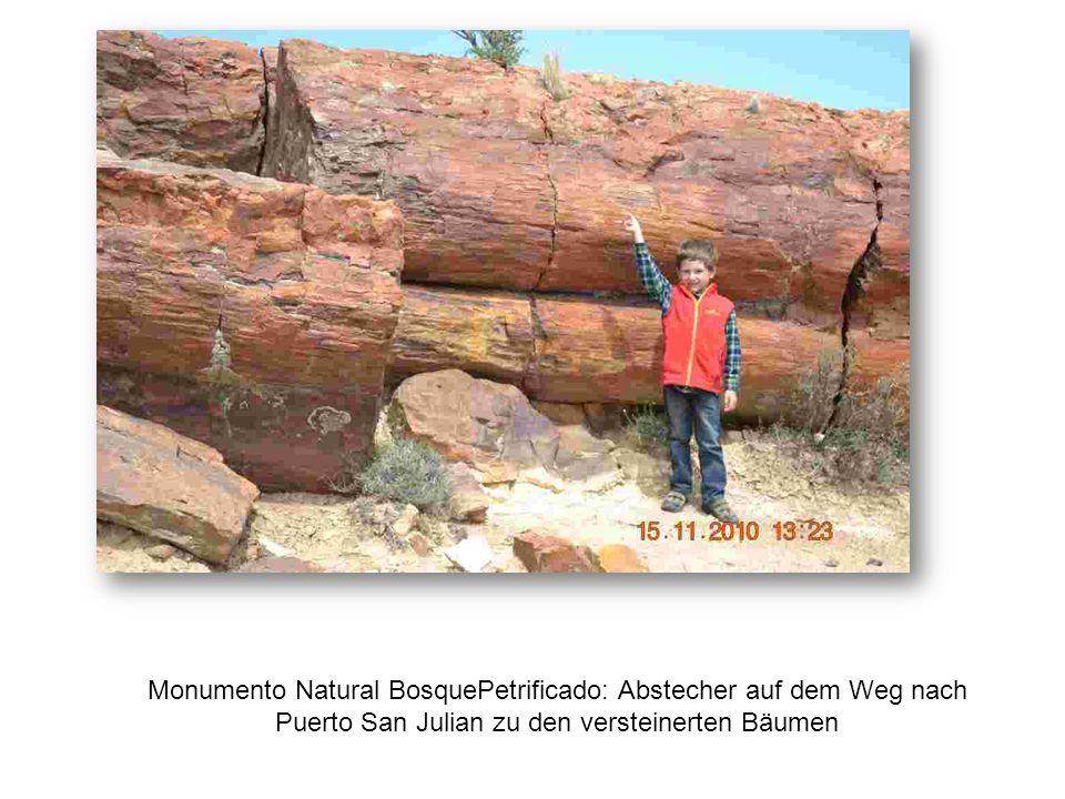 Monumento Natural BosquePetrificado: Abstecher auf dem Weg nach Puerto San Julian zu den versteinerten Bäumen