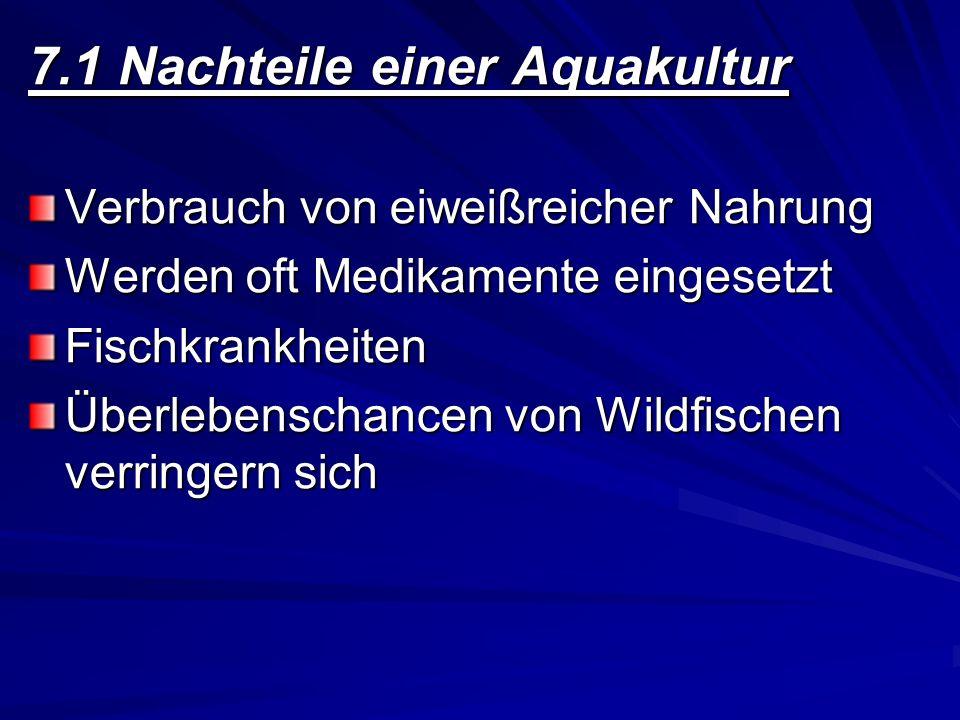 7.1 Nachteile einer Aquakultur Verbrauch von eiweißreicher Nahrung Werden oft Medikamente eingesetzt Fischkrankheiten Überlebenschancen von Wildfische