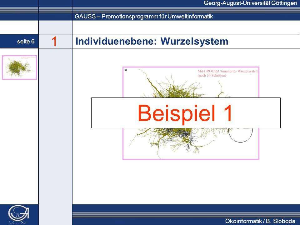 GAUSS – Promotionsprogramm für Umweltinformatik Georg-August-Universität Göttingen seite 6 Ökoinformatik / B. Sloboda Individuenebene: Wurzelsystem nä