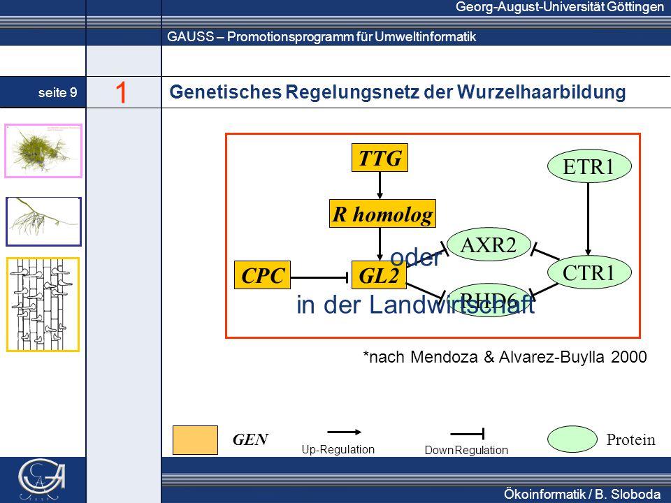 GAUSS – Promotionsprogramm für Umweltinformatik Georg-August-Universität Göttingen seite 9 Ökoinformatik / B. Sloboda Genetisches Regelungsnetz der Wu
