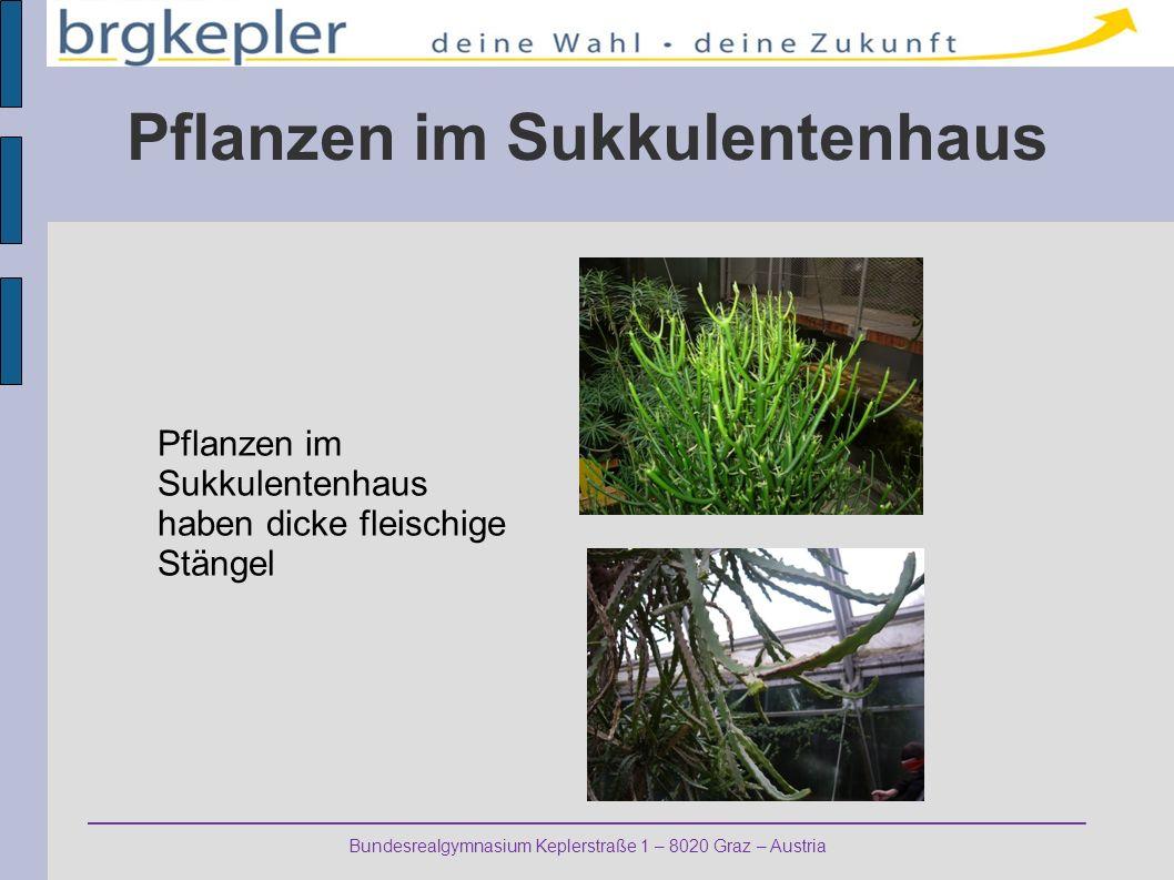 Pflanzen im Sukkulentenhaus Pflanzen im Sukkulentenhaus haben dicke fleischige Stängel