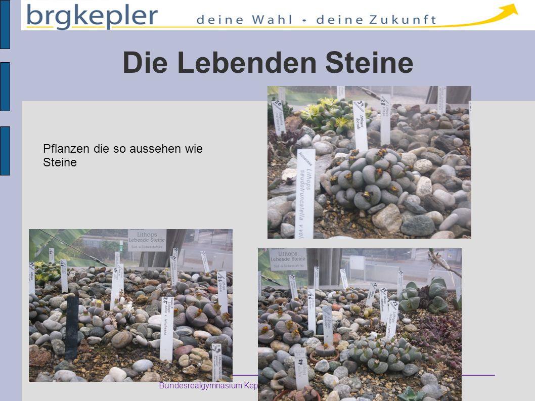 Bundesrealgymnasium Keplerstraße 1 – 8020 Graz – Austria Die Lebenden Steine Pflanzen die so aussehen wie Steine
