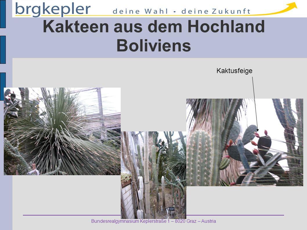 Bundesrealgymnasium Keplerstraße 1 – 8020 Graz – Austria Kakteen aus dem Hochland Boliviens Kaktusfeige