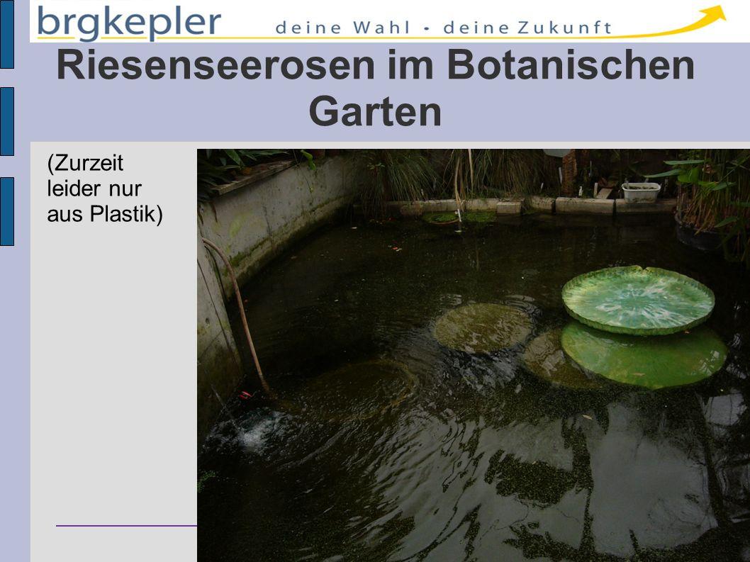 Bundesrealgymnasium Keplerstraße 1 – 8020 Graz – Austria Riesenseerosen im Botanischen Garten (Zurzeit leider nur aus Plastik)