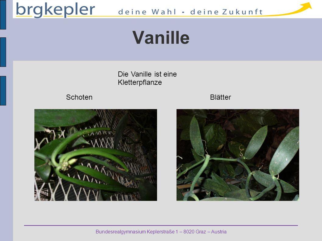 Bundesrealgymnasium Keplerstraße 1 – 8020 Graz – Austria Vanille BlätterSchoten Die Vanille ist eine Kletterpflanze