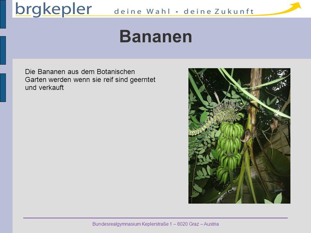 Bundesrealgymnasium Keplerstraße 1 – 8020 Graz – Austria Bananen Die Bananen aus dem Botanischen Garten werden wenn sie reif sind geerntet und verkauf