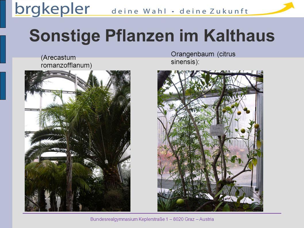 Bundesrealgymnasium Keplerstraße 1 – 8020 Graz – Austria Sonstige Pflanzen im Kalthaus (Arecastum romanzofflanum) Orangenbaum (citrus sinensis):
