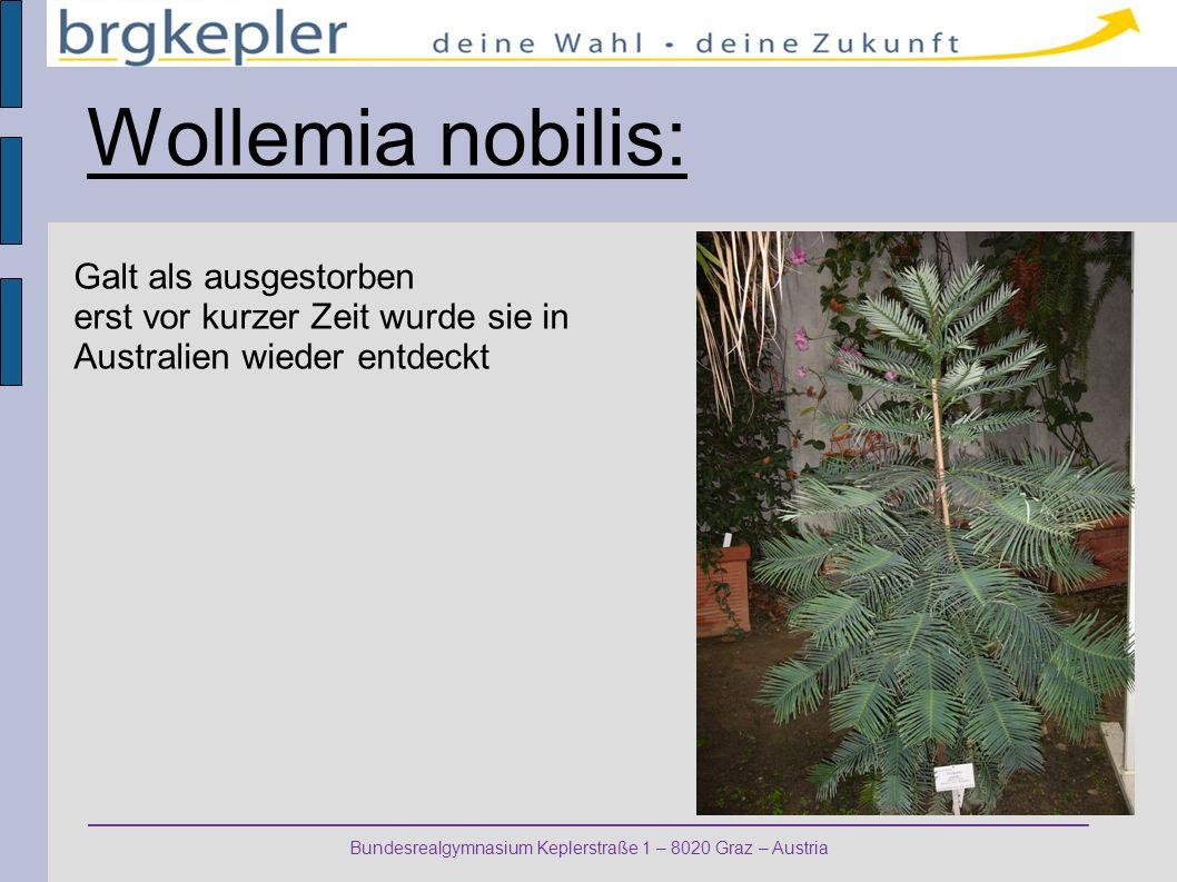 Bundesrealgymnasium Keplerstraße 1 – 8020 Graz – Austria Wollemia nobilis: Galt als ausgestorben erst vor kurzer Zeit wurde sie in Australien wieder entdeckt