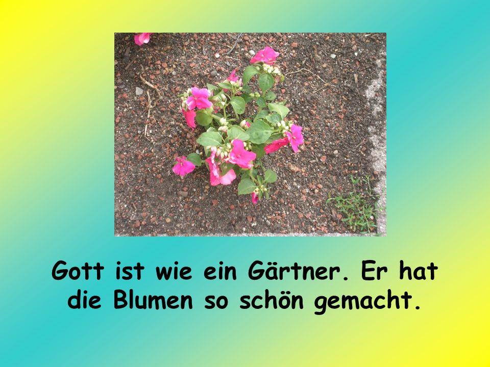 Gott ist wie ein Gärtner. Er hat die Blumen so schön gemacht.