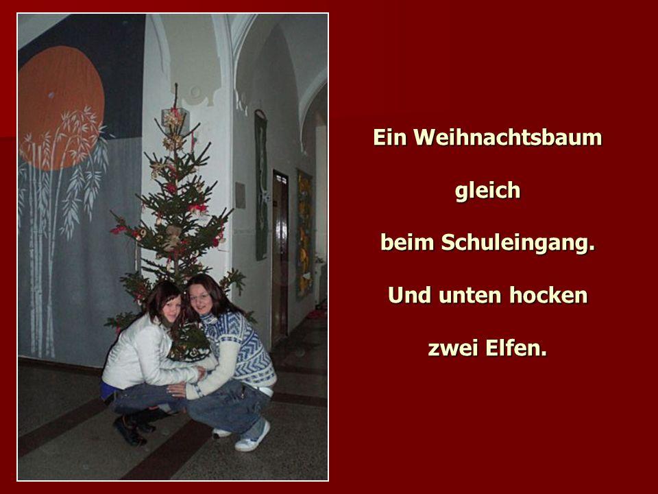 Ein Weihnachtsbaum gleich beim Schuleingang. Und unten hocken zwei Elfen.