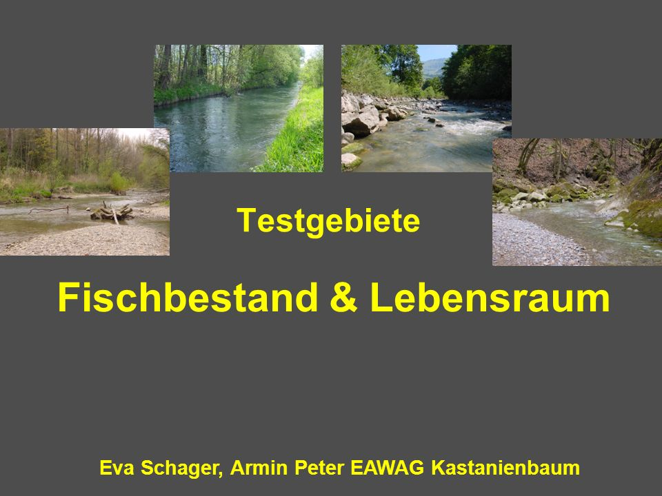 Eva Schager, Armin Peter EAWAG Kastanienbaum Testgebiete Fischbestand & Lebensraum