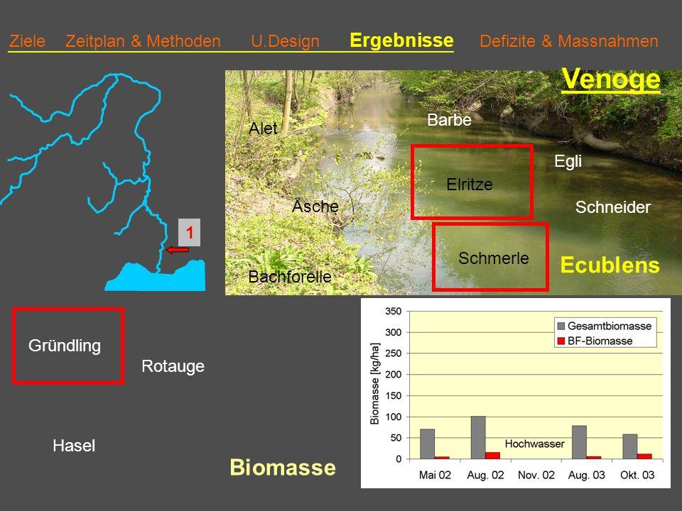 Ziele Zeitplan & Methoden U.Design Ergebnisse Defizite & Massnahmen Venoge Ecublens Bachforelle Äsche Alet Barbe Schmerle Elritze Egli Rotauge Gründling Hasel Schneider 1 Biomasse