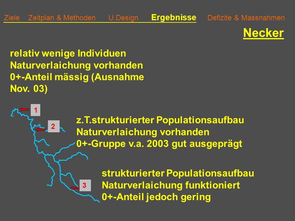 Ziele Zeitplan & Methoden U.Design Ergebnisse Defizite & Massnahmen Necker z.T.strukturierter Populationsaufbau Naturverlaichung vorhanden 0+-Gruppe v.a.