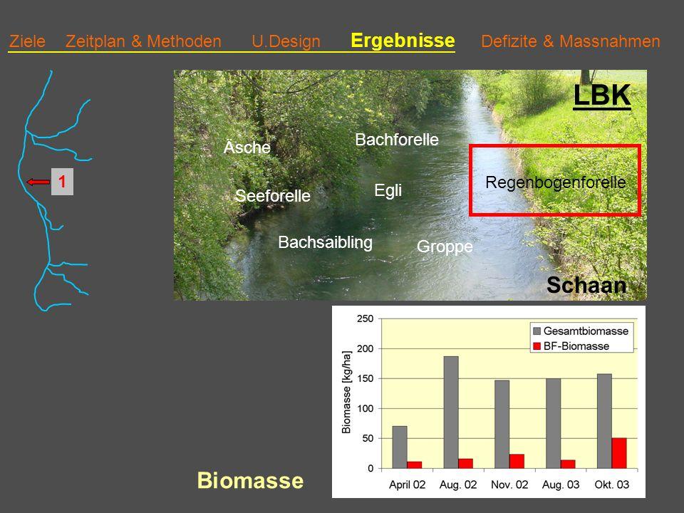 Ziele Zeitplan & Methoden U.Design Ergebnisse Defizite & Massnahmen LBK Schaan Bachforelle Äsche Groppe Regenbogenforelle Bachsaibling Egli Seeforelle 1 Biomasse
