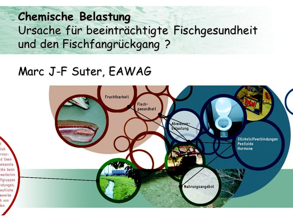 Chemische Belastung Ursache für beeinträchtigte Fischgesundheit und den Fischfangrückgang ? Marc J-F Suter, EAWAG