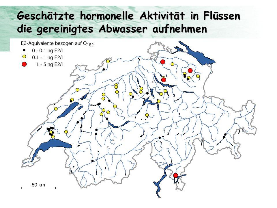 Geschätzte hormonelle Aktivität in Flüssen die gereinigtes Abwasser aufnehmen