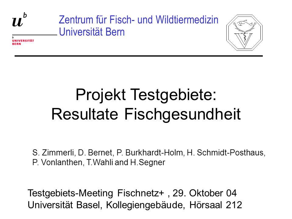 Projekt Testgebiete: Resultate Fischgesundheit Zentrum für Fisch- und Wildtiermedizin Universität Bern Testgebiets-Meeting Fischnetz+, 29. Oktober 04
