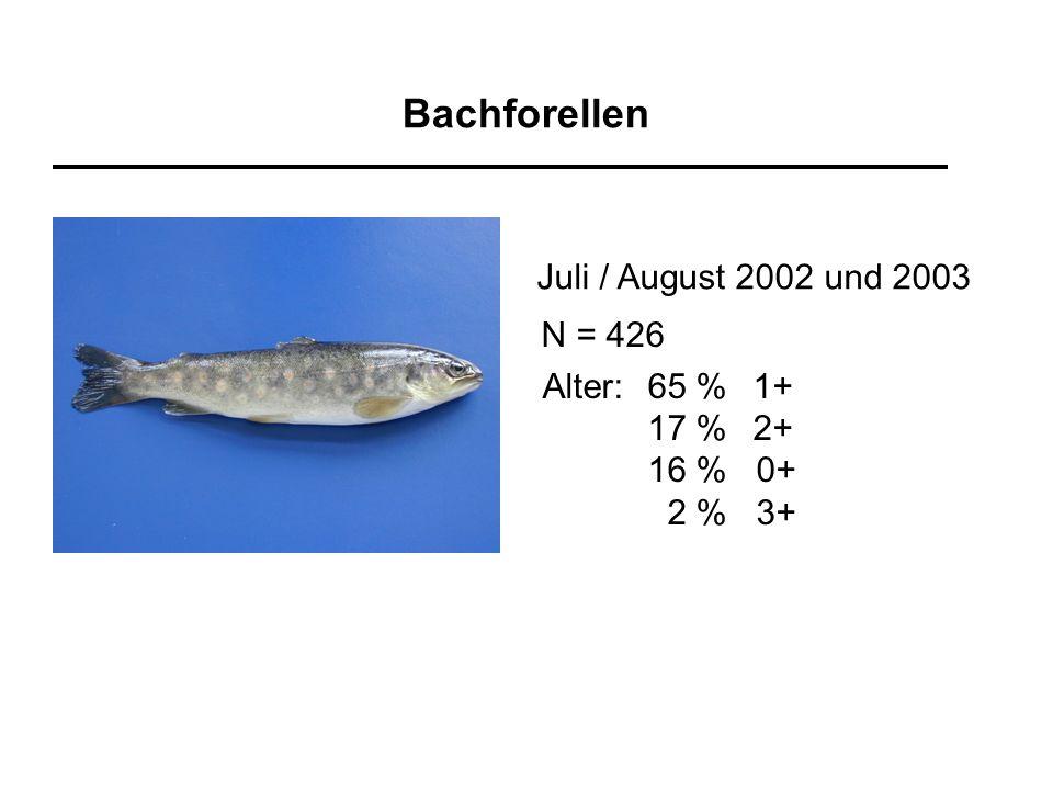 Bachforellen Juli / August 2002 und 2003 Alter:65 %1+ 17 %2+ 16 % 0+ 2 % 3+ N = 426