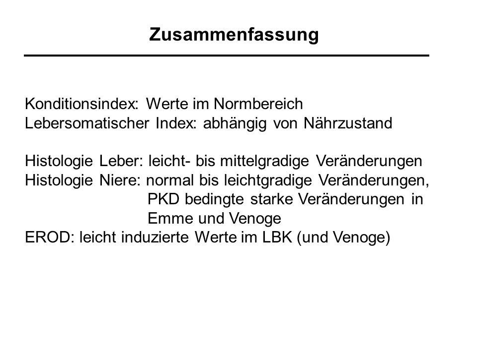Zusammenfassung Konditionsindex: Werte im Normbereich Lebersomatischer Index: abhängig von Nährzustand Histologie Leber: leicht- bis mittelgradige Ver