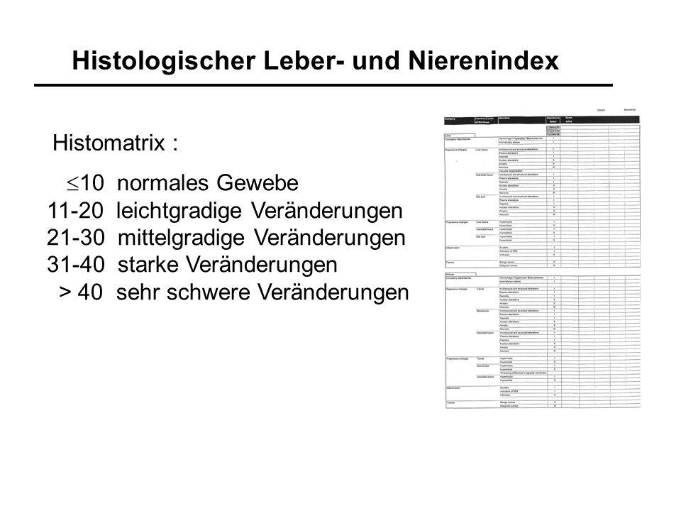 Histologischer Leber- und Nierenindex 10 normales Gewebe 11-20 leichtgradige Veränderungen 21-30 mittelgradige Veränderungen 31-40 starke Veränderunge