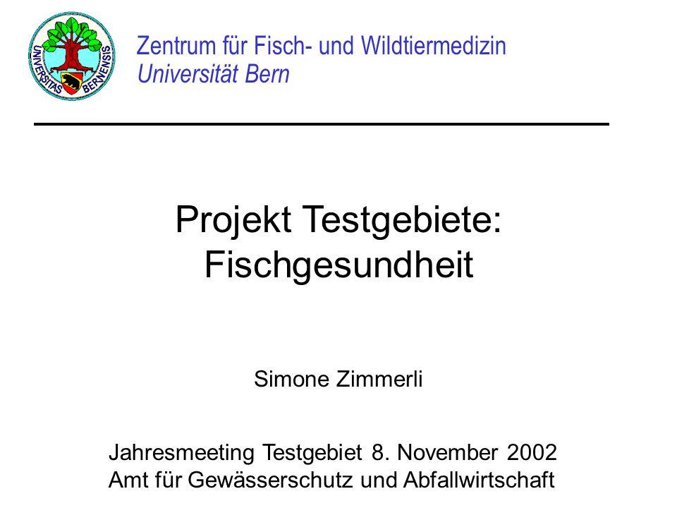 Projekt Testgebiete: Fischgesundheit Zentrum für Fisch- und Wildtiermedizin Universität Bern Simone Zimmerli Jahresmeeting Testgebiet 8. November 2002