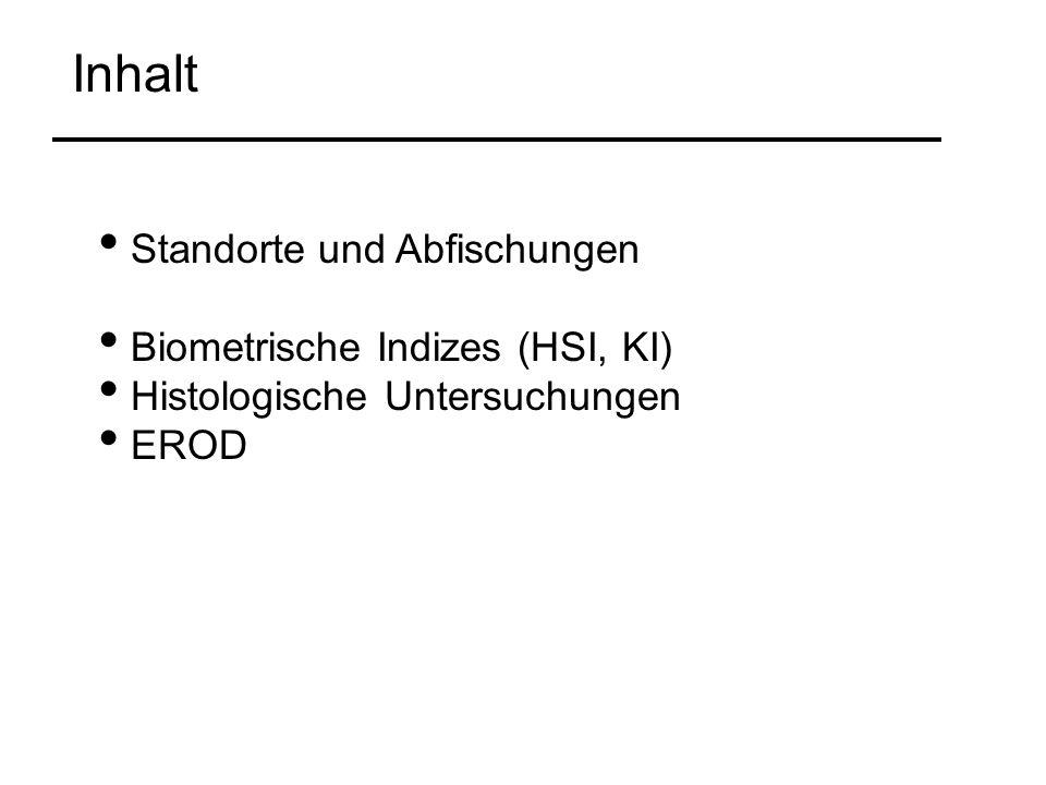 Standorte und Abfischungen Biometrische Indizes (HSI, KI) Histologische Untersuchungen EROD Inhalt