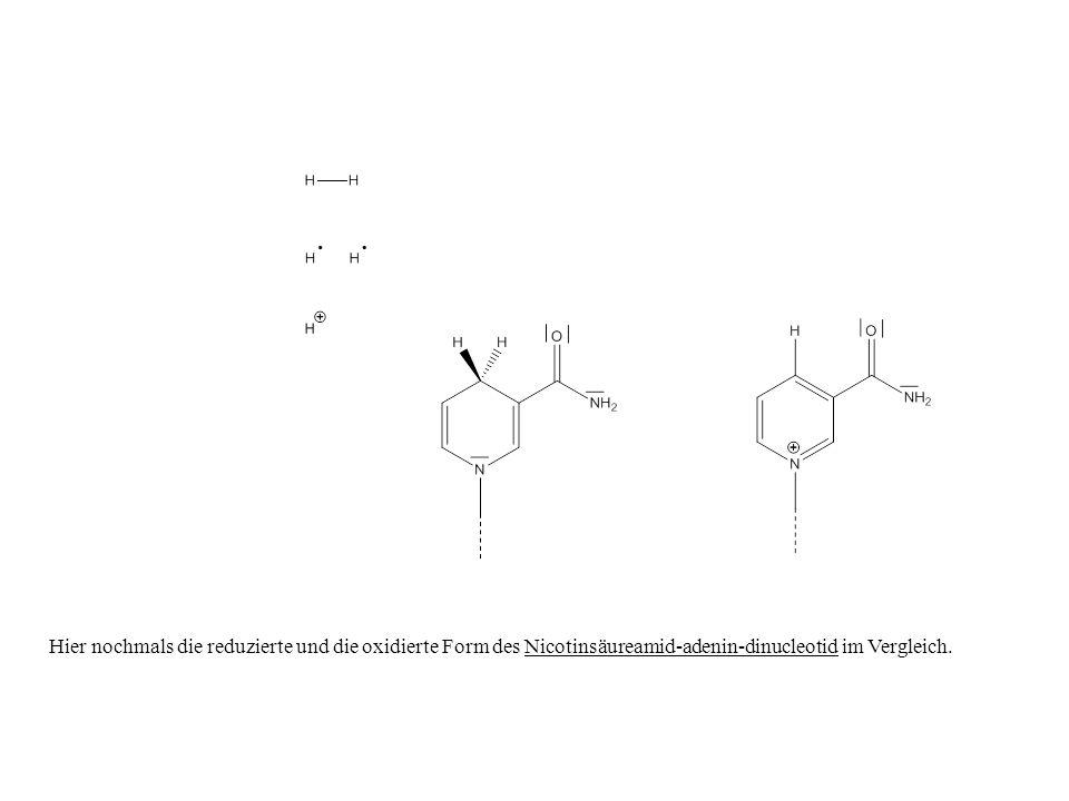 Hier nochmals die reduzierte und die oxidierte Form des Nicotinsäureamid-adenin-dinucleotid im Vergleich.