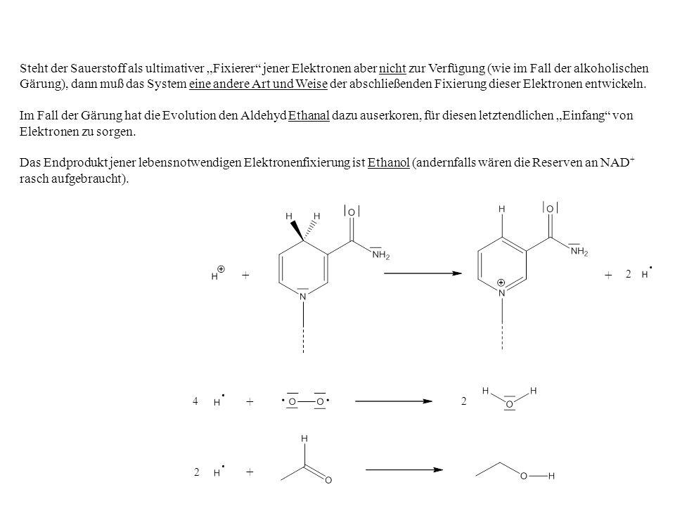 2 2 ++ 4 + + 2 Steht der Sauerstoff als ultimativer Fixierer jener Elektronen aber nicht zur Verfügung (wie im Fall der alkoholischen Gärung), dann muß das System eine andere Art und Weise der abschließenden Fixierung dieser Elektronen entwickeln.